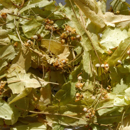 Tisane Tilleul Bio (Tilia platyphyllos) 20g
